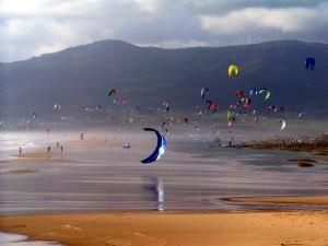 kite (10)